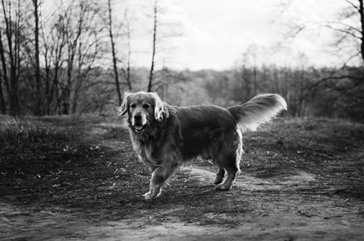 Woofin In Dog Walking